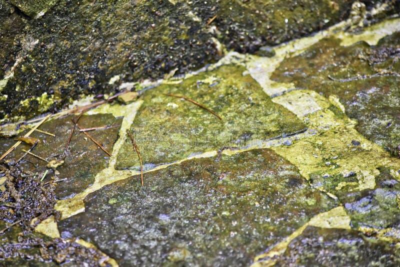 Flagstone, σκοτεινό χρώμα, με τα άλγη και τη φυσική όρφνωση στοκ φωτογραφίες με δικαίωμα ελεύθερης χρήσης