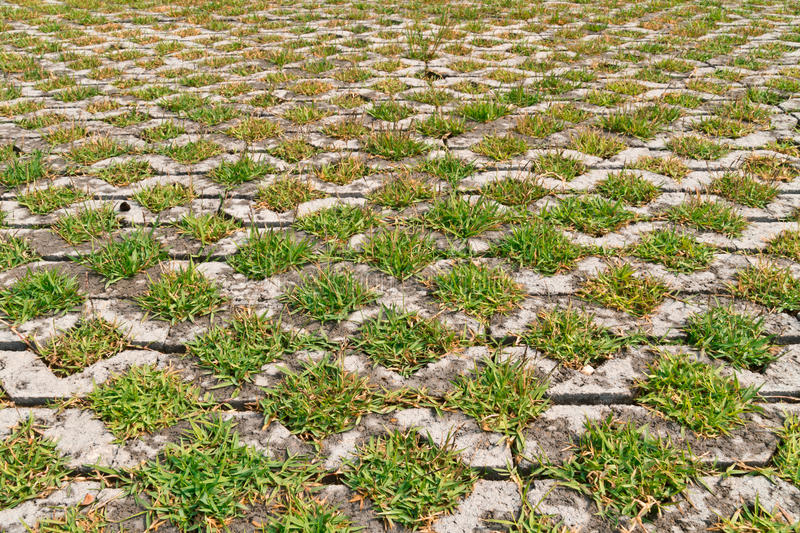 Flagstones with green grasses patern. Walk path made from flagstones and green grasses royalty free stock photos