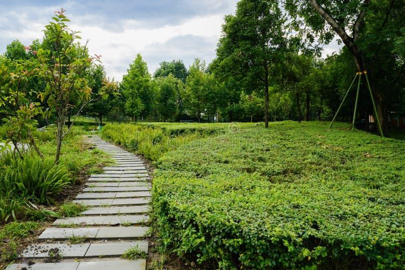 Flagstoneweg in installaties en bomen na regen op de bewolkte zomer D stock fotografie