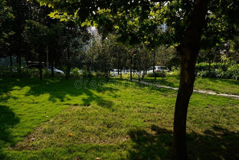 Flagstoneweg in up-slope gazon aan parkeerterrein vóór flats royalty-vrije stock afbeelding
