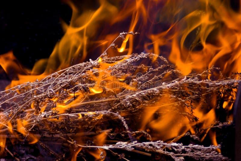 Flama do perigo fotografia de stock royalty free