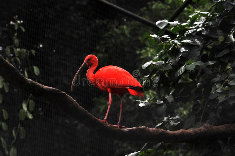 Flamant chez Parque DAS Aves photos stock