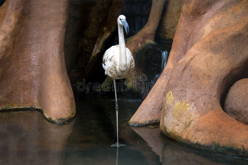 Flamant chez Parque DAS Aves - Foz font Iguacu, Parana, Brésil photos stock