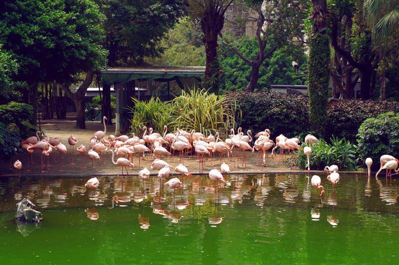 Flamant en parc de Kowloon de Hong Kong images stock