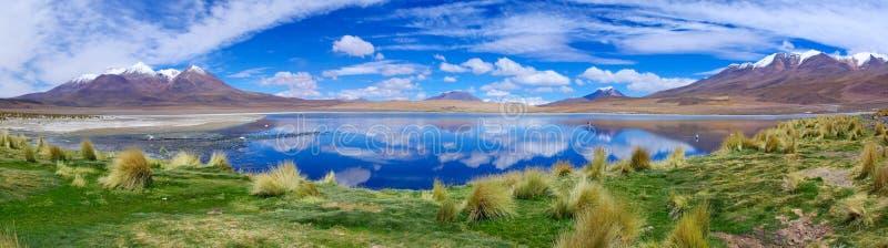 Flamant rose dans le lac Hedionda, Bolivie image stock