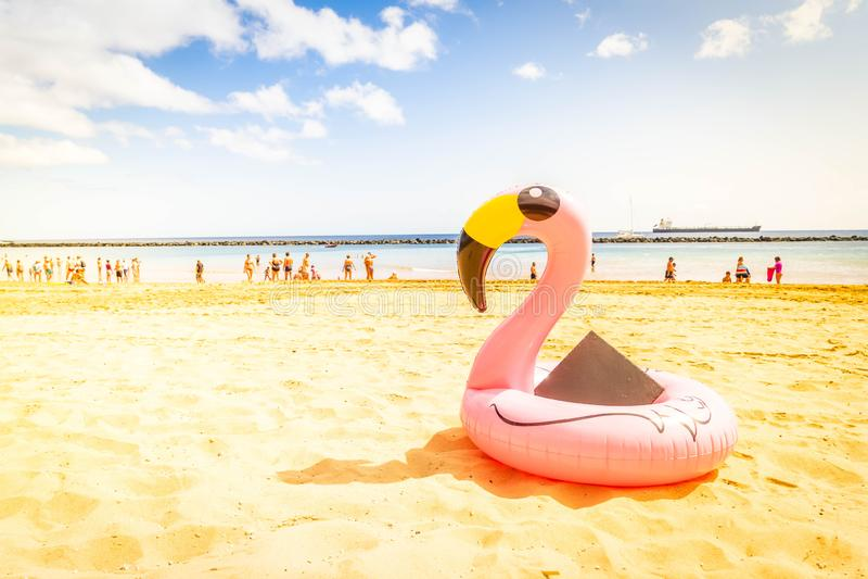 Flamant rose sur la plage image stock
