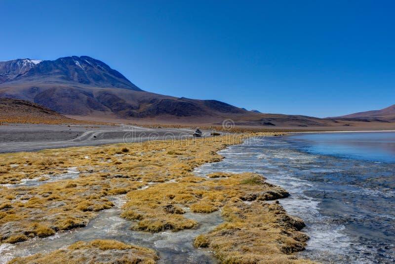 Flamants roses Laguna Hedionda Altiplano Bolivie images libres de droits