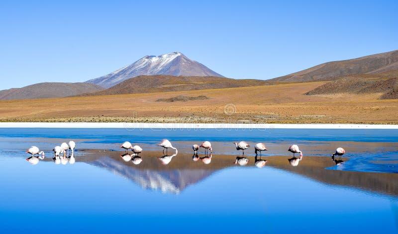Flamants sur Laguna Celeste, Bolivie image stock