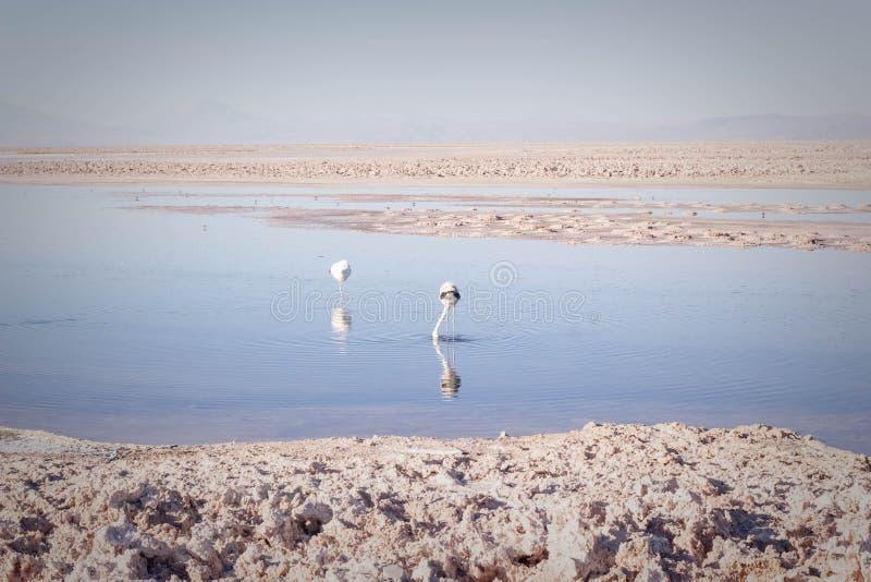 Flamants sur le lac image libre de droits