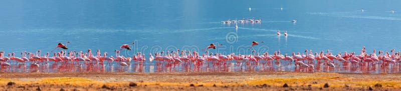 Flamants sur le lac Bogoria photo libre de droits