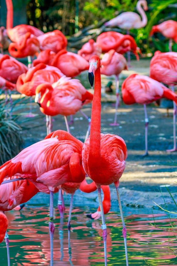 Free Flamboyance Of Flamingos Royalty Free Stock Image - 65351066