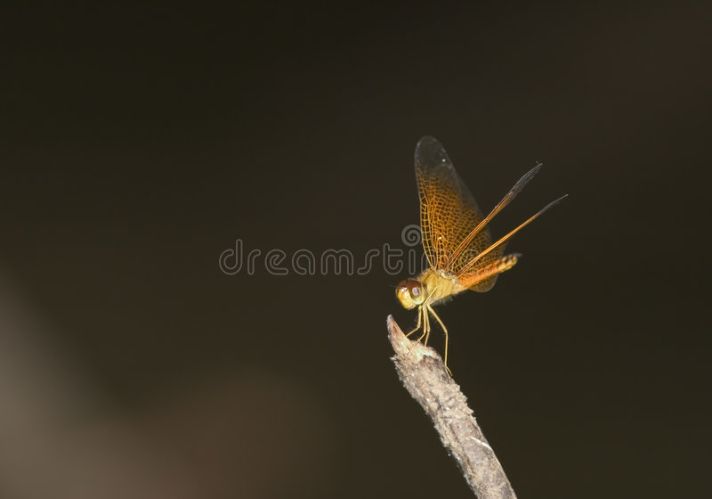 Download Flame Royalty Free Stock Photo - Image: 178645