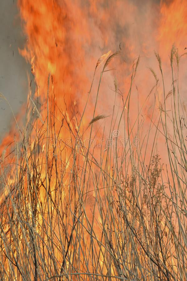 Flame of brushfire 28 royalty free stock photo