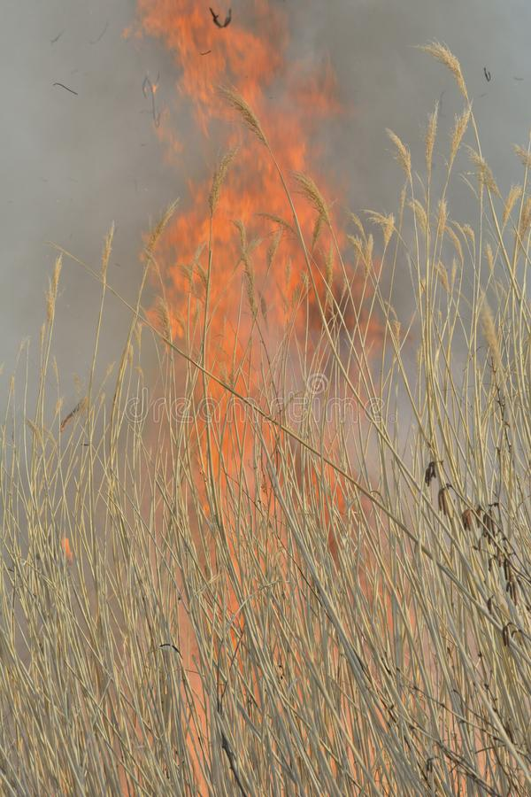 Flame of brushfire 36 stock images
