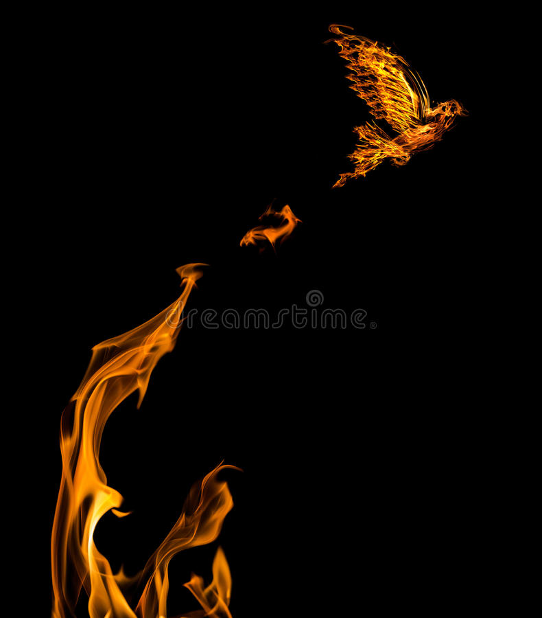 Flame dove flying from orange flire isolated stock photography