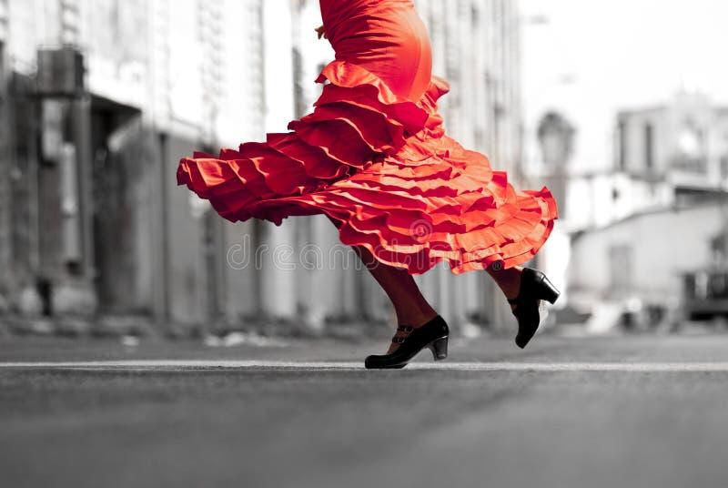 Flamenco imagens de stock royalty free