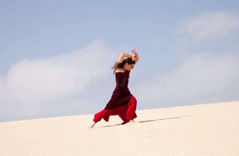 Flamenco in den Dünen stockfotografie
