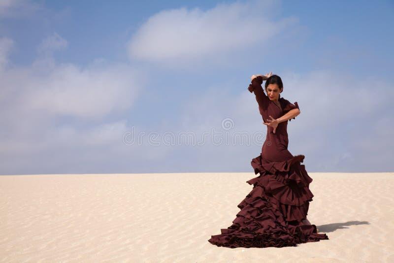 Flamenco in den Dünen stockbilder