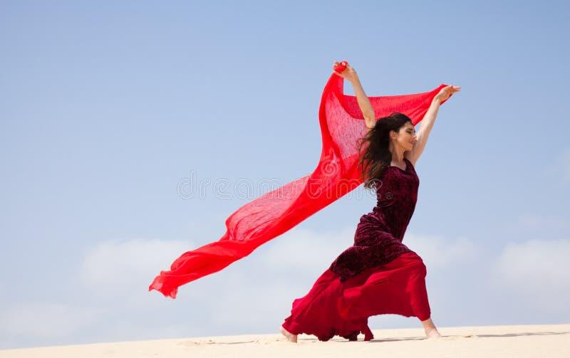 Flamenco in den Dünen stockfotos