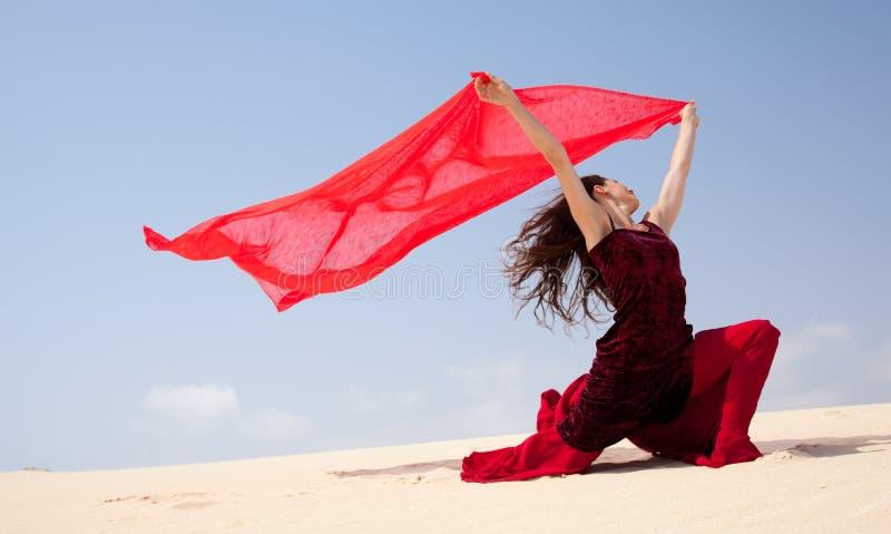 Flamenco in den Dünen lizenzfreie stockfotos