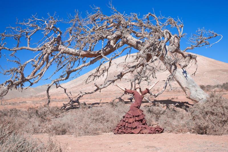 Flamenco ed albero morto fotografia stock libera da diritti