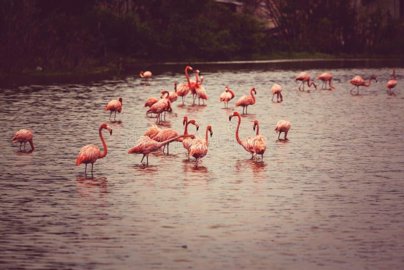Download Flamenco en México foto de archivo. Imagen de anaranjado - 64207554