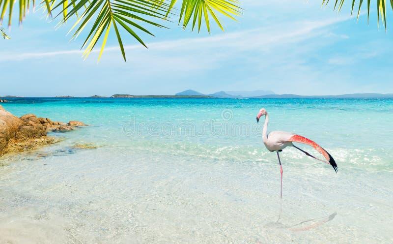 Flamenco en una playa tropical foto de archivo libre de regalías
