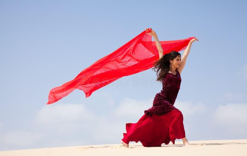 Flamenco nas dunas imagens de stock
