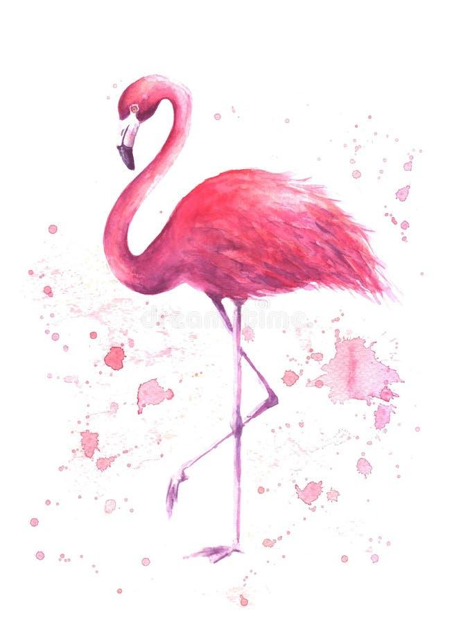 Flamenco rosado de la acuarela stock de ilustración