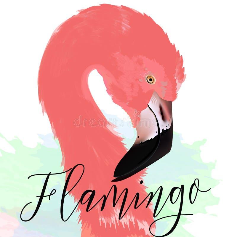 Flamenco rosado dibujado ejemplo hermoso del vector ilustración del vector