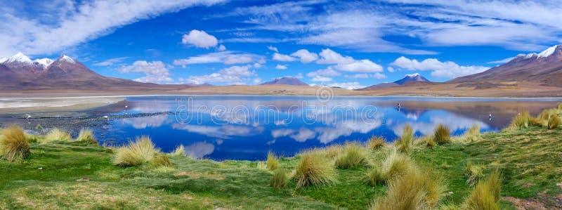 Flamenco rosado en Bolivia Panorama imagenes de archivo