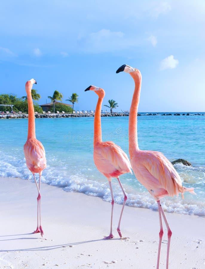 Flamenco rosado en la playa imagen de archivo