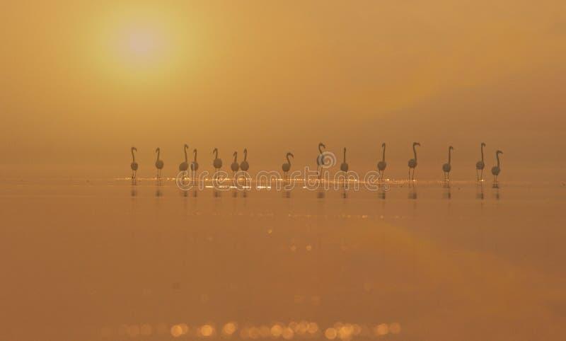Flamencos en puesta del sol foto de archivo