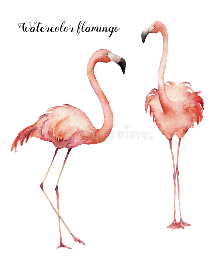 Flamencos rosados que ligan de la acuarela dos fijados Pájaros exóticos brillantes pintados a mano aislados en el fondo blanco Vi ilustración del vector