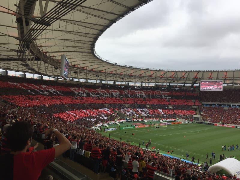 Flamengo obrazy royalty free