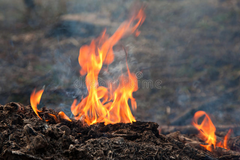 Download Flames stock photo. Image of burn, flame, fire, glowing - 24491200