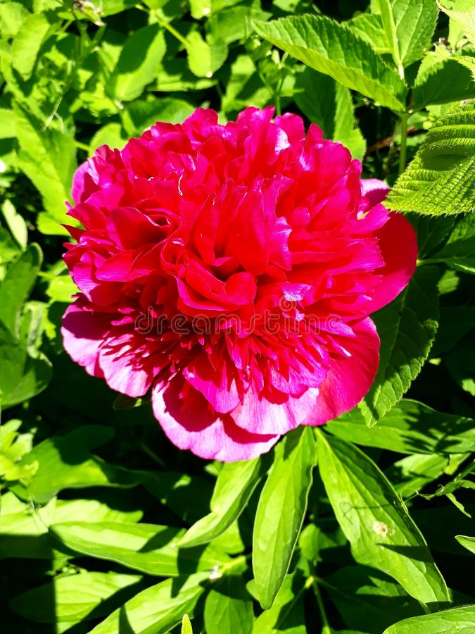 Flaming flower royalty free stock photo