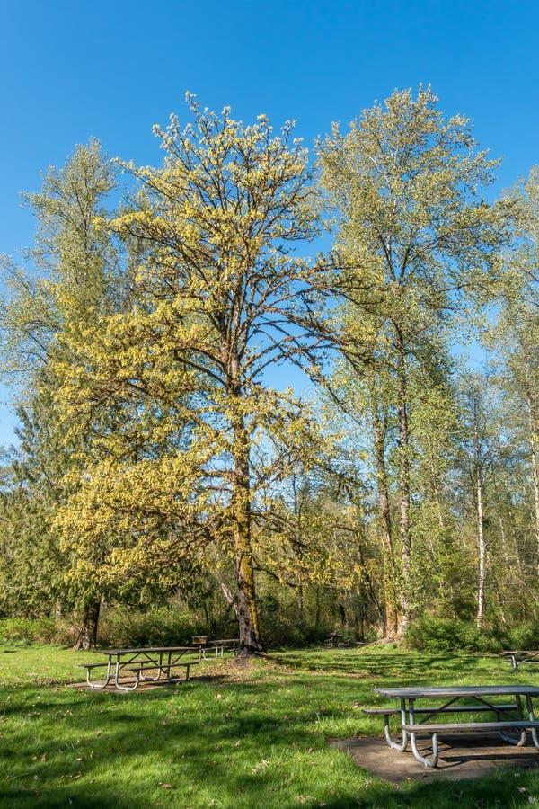 Flaming Geyser - Yellow Tree royalty free stock photo