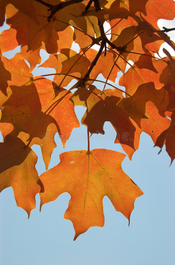 Flaming Leaves royalty free stock photos