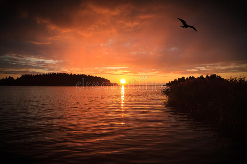 Flaming Sunset. A sea view with sunset and a bird flying on flaming sky stock images