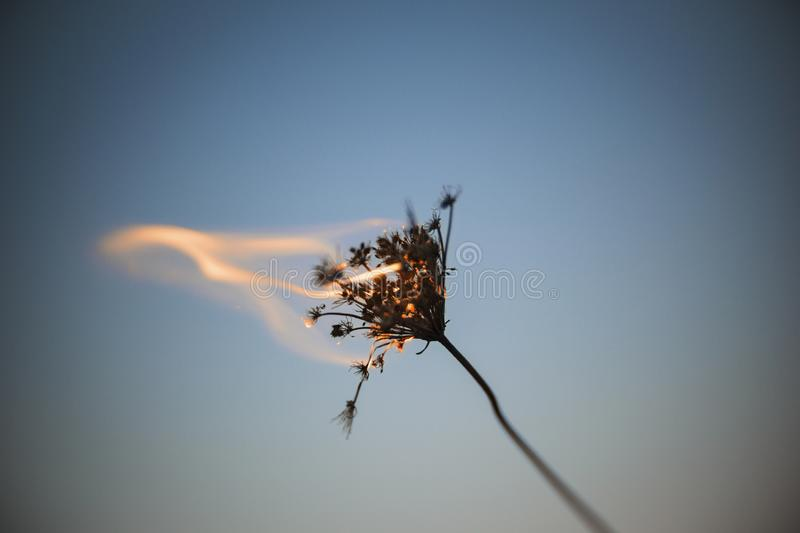 Flaming Weed. Artistic flaming weed background photo royalty free stock photos