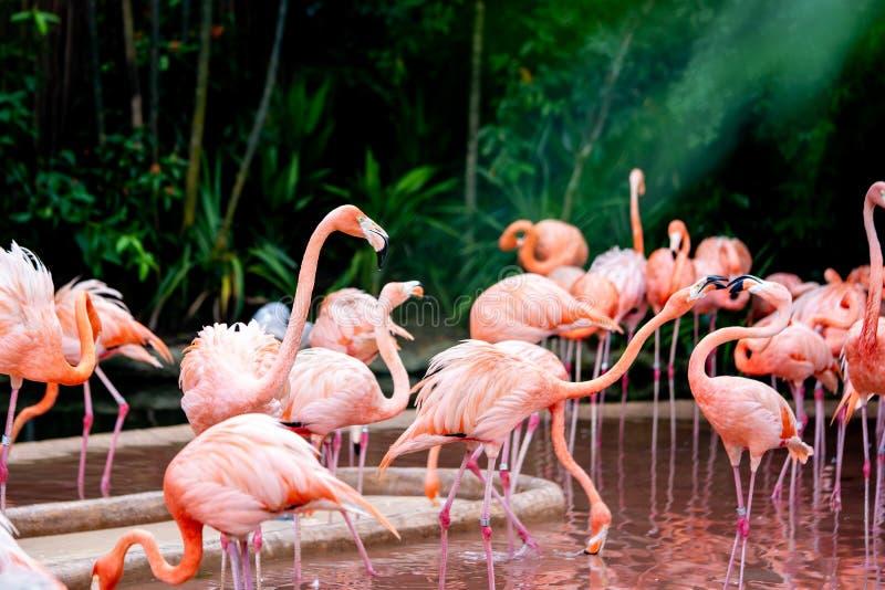 Flaminga dopatrywanie dalej jako inny bicker obrazy stock