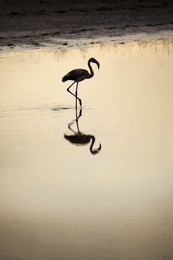 flaminga jeziora zmierzch obraz royalty free