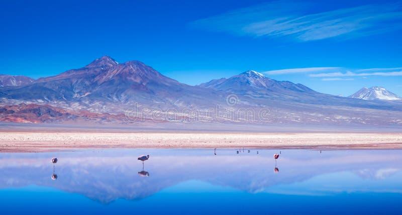 Flaminga krajobraz fotografia royalty free