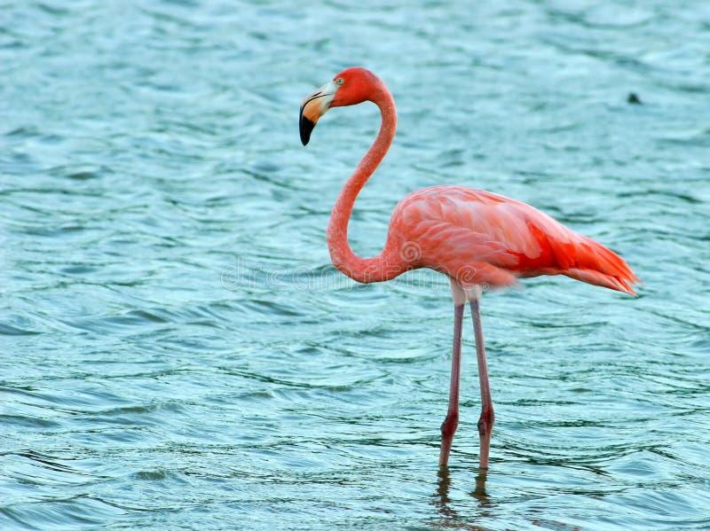 flaminga target2225_0_ zdjęcia stock