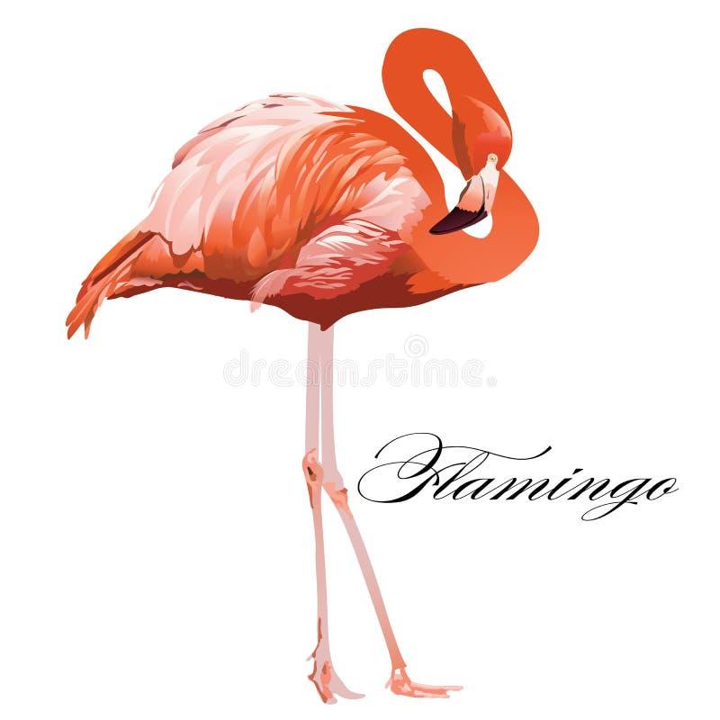 Flaminga tropikalny egzotyczny koralowy ptak Wektor odosobniona ilustracja royalty ilustracja