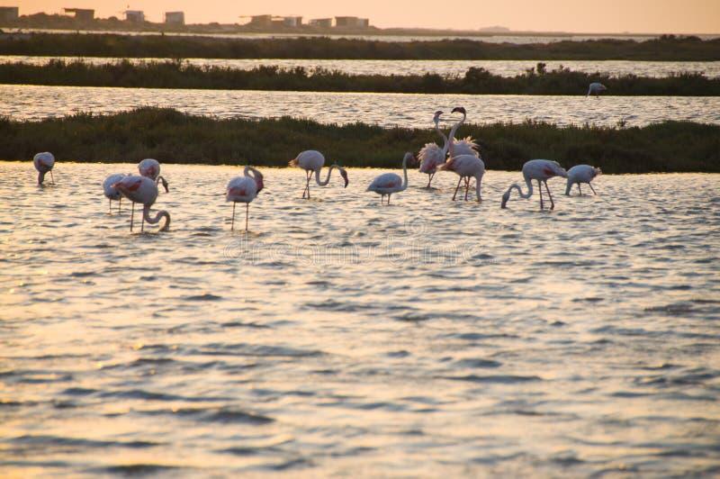 Flamingi… obrazy royalty free