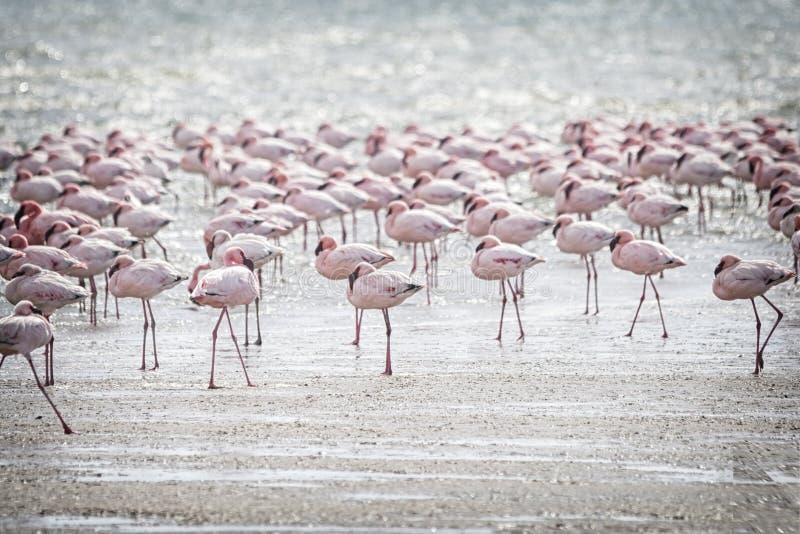 flamingi obraz stock