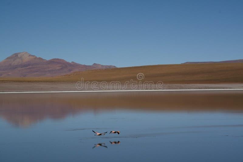 Flamingi przy średniogórzami obrazy stock
