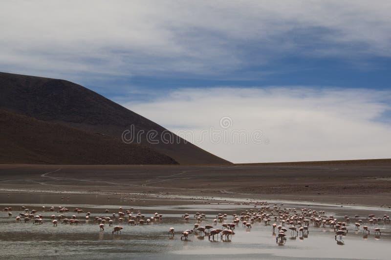 Flamingi przy średniogórzami fotografia royalty free